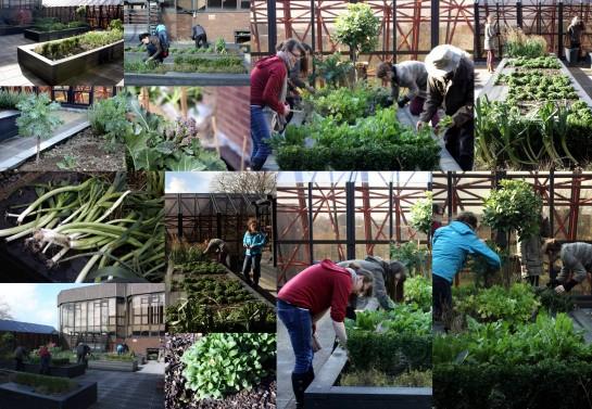 UL community garden
