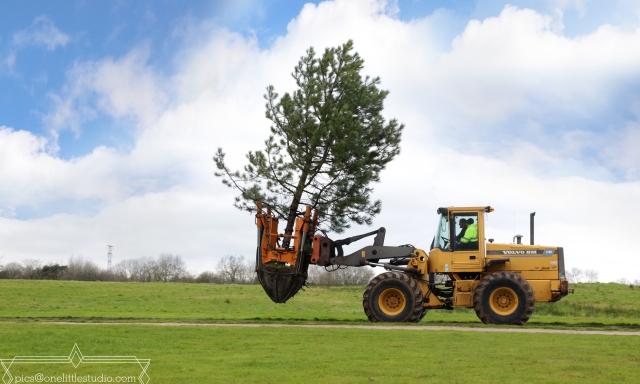 Pine en route