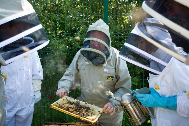 ul-apiary-026
